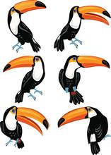 Set Of Toucans