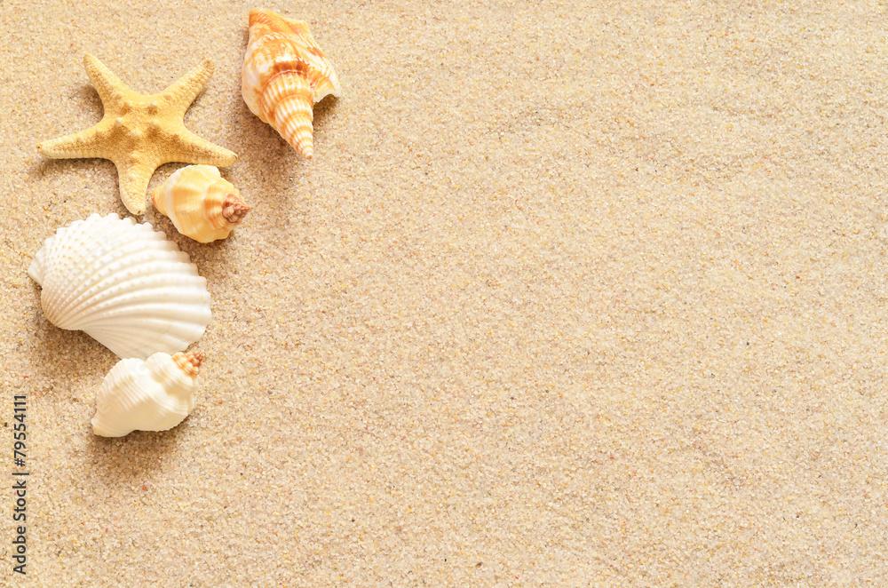 Fototapeta Seashells on sand