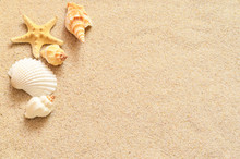 Seashells On Sand