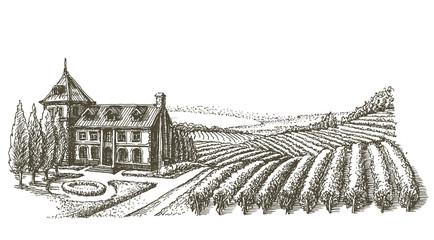 Fototapetavineyard vector logo design template. village or farm icon.
