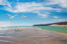 Seagulls By The Shore Of Costa Calma In Fuerteventura,