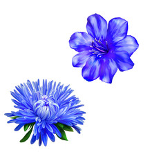 Beautiful Bright Blue Spring Flower, Aster. Blue Bloom