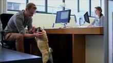 Businessman Petting Dog