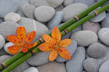 Two Orange Orchid And Grove On Gray Stones Background