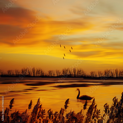 Staande foto Zeilen Beautiful landscape with birds