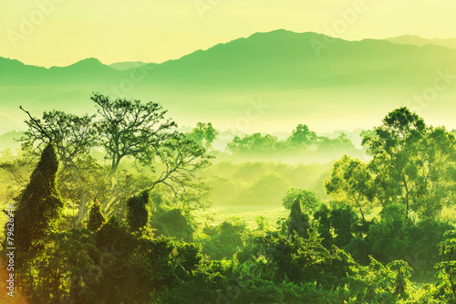 Fotografie, Obraz  Džungle v Mexiku