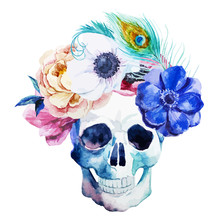 Anemones And Scull