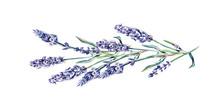 Lavender Twig