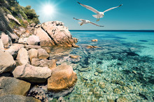Seagulls Over Shallow Water In Northern Greece