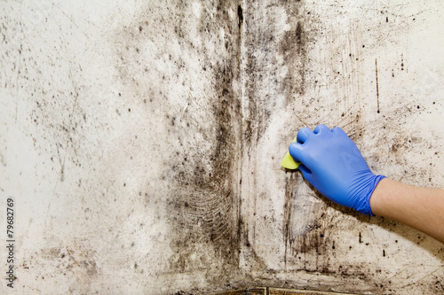 Fototapeta Hand cleans mold in the house