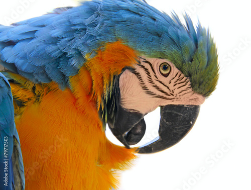 Deurstickers Papegaai parrot bird animal head