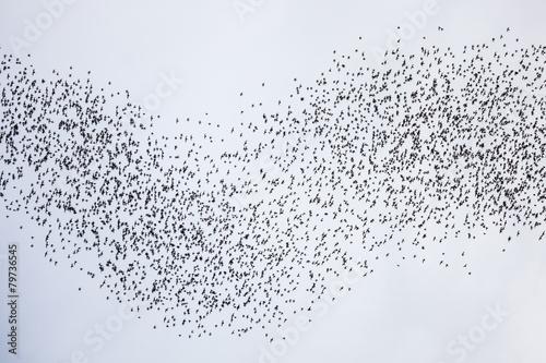 Leinwand Poster Bats flying in gunung mulu national park