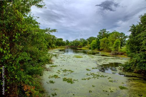 Valokuva  Pond