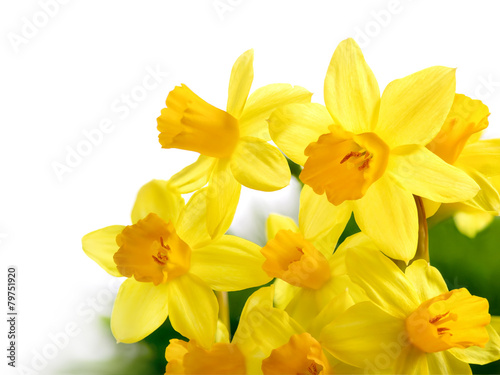 Deurstickers Narcis Narzissenstrauß auf weißem Hintergrund