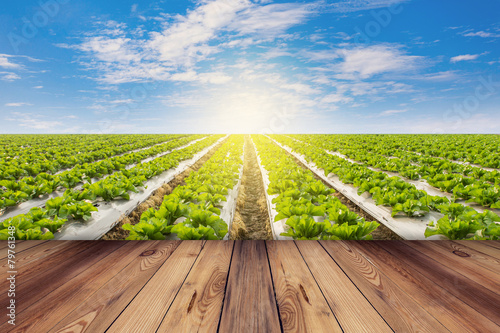 Papiers peints Culture Green lettuce and wooden floor on field agricuture with blue sky