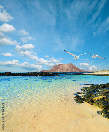 Photo Stands Tropical beach Wild seashore in Fuerteventura