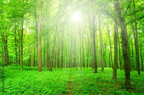 Recess Fitting Panorama Photos sunlight forest