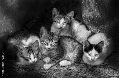 Fotografia, Obraz  yavru kediler