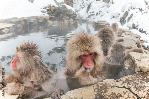 Foto op Plexiglas Aap 温泉で推理?中のニホンザル Japanese monkey think about in a hot spring