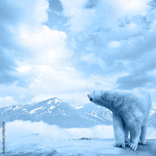 Tuinposter Ijsbeer Arctic polar bear, Ursus maritimus