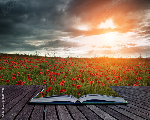 Keuken foto achterwand Khaki Beautiful poppy field landscape during sunset with dramatic sky