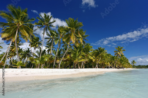 Poster Tropical plage DOMINICAN REPUBLIC, SAONA ISLAND, PALM TREES ON BEACH