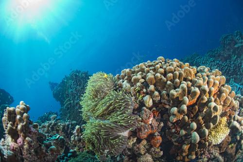 Tuinposter Koraalriffen diving in colorful reef underwater