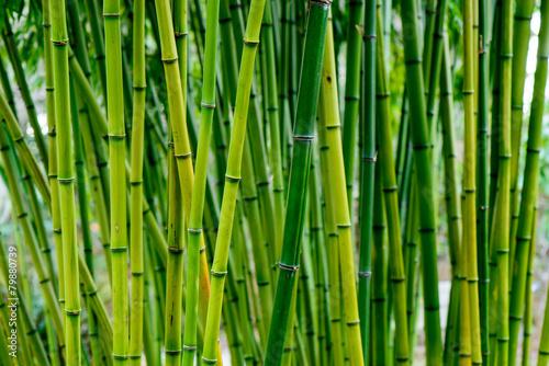 In de dag Bamboo Bamboo forest