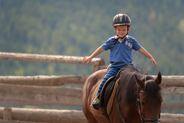 Jung Pferde