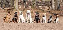 Group Of Dogs On Obedience Training