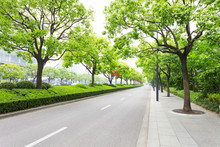 Trees Decorated Road In Modern...