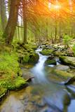 Górska rzeka w grren lesie - 79961373