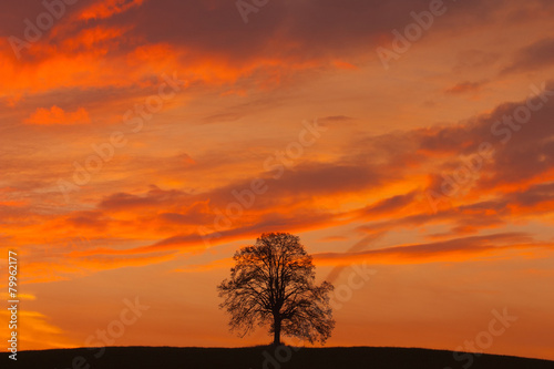 Foto op Canvas Baksteen Lonely tree on the hill at sunrise