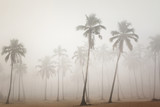 Palms in morning fog in Arambol, Goa, India - 79971756