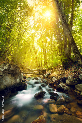 Spoed Foto op Canvas Oranje Sunset in the beautiful forest. Mountain river. Summer landscape