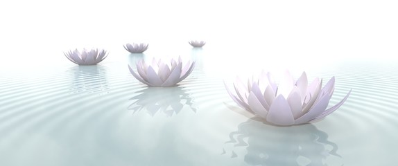 FototapetaZen Flowers on water in widescreen