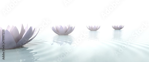 Fototapety, obrazy: Zen lotus flowers draw a path on the water