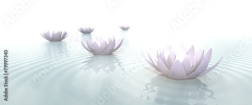 Photographie  Zen Flowers on water in widescreen