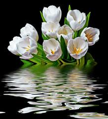 Obraz na Szklewhite tulips