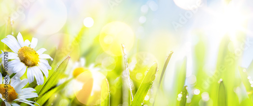 art abstract sunny  springr flower background - 80015720