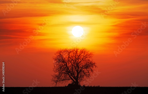 Tuinposter Rood Tree silhouette with sun and red orange yellow sky