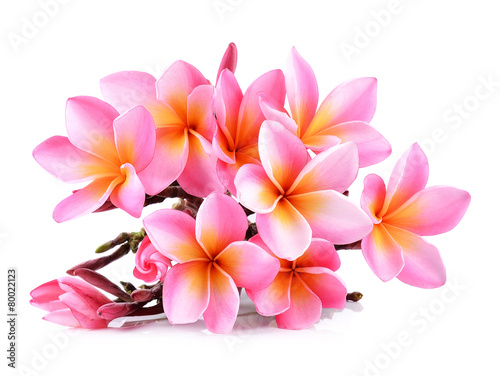 Pink Plumeria flowers isolated on white background Poster Mural XXL
