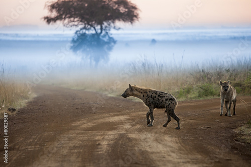 Tuinposter Hyena Hyenas before dawn