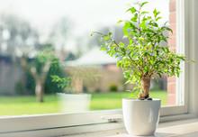 Tree In A Window