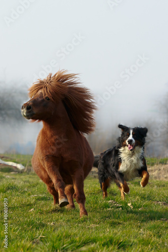 Pony galoppiert mit Hund Canvas Print