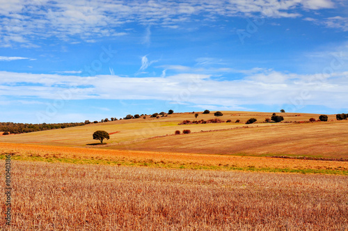 Stickers pour porte Orange eclat cornfield landscape in the province of Soria, Spain