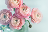 Bouquet of pink ranunculus in vase