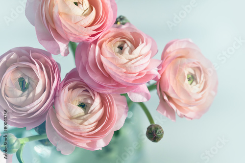 Bouquet of pink ranunculus in vase Fototapeta