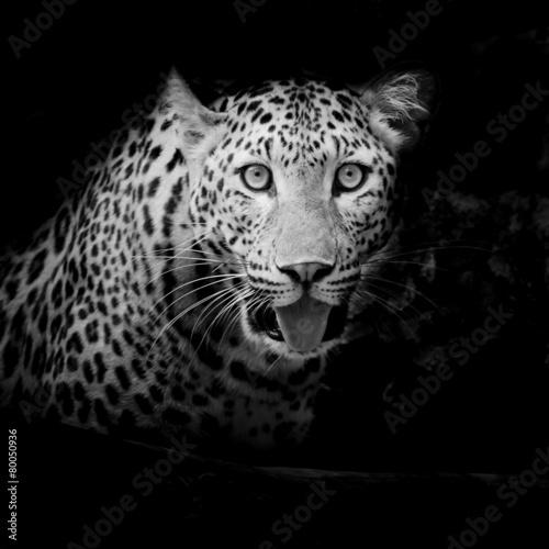 Staande foto Buffel Leopard portrait