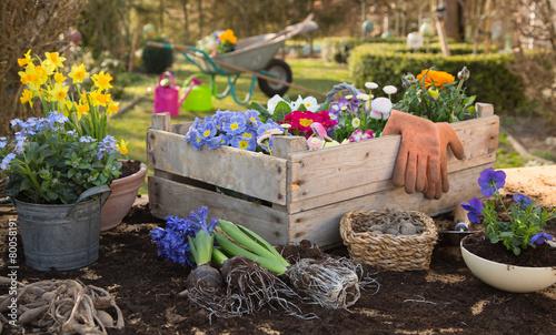 Frühlingsblumen: Blumen einpflanzen im Frühjahr #80058191